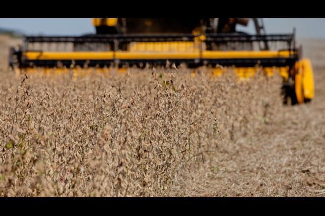 Safra de soja atinge recorde e chega a 11,3 milhões de toneladas