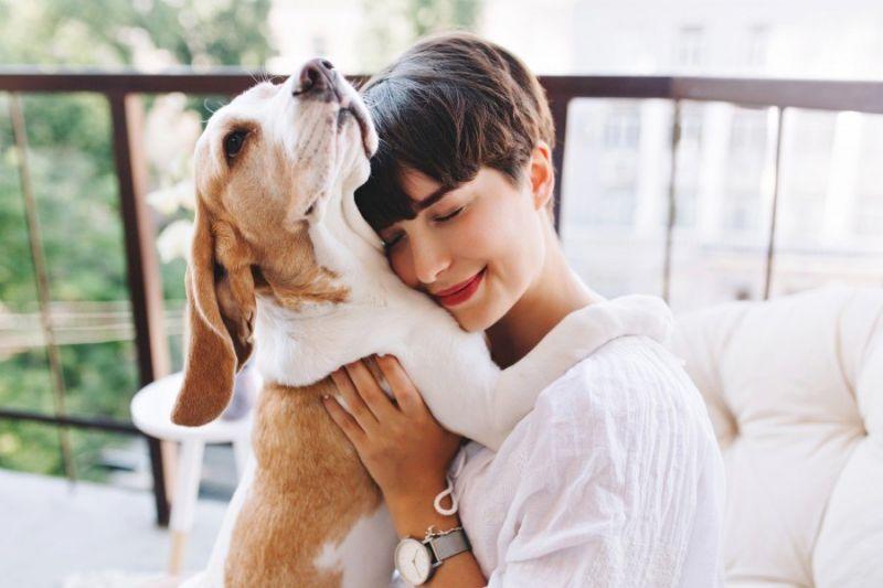Animais ajudam humanos até a conhecer novas pessoas - (Foto: Freepik)