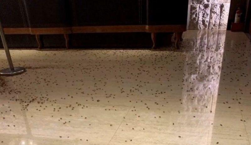 O chão do restaurante taiwanês ficou coberto de baratas - (Foto: Reprodução / YouTube)